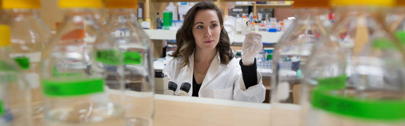 scientist examines specimen